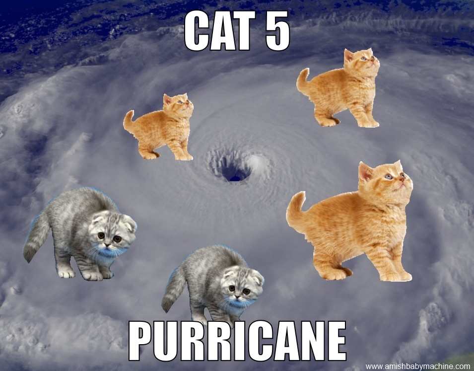 Funny Meme Categories : Cat 5 purricane meme amish baby machine podcast