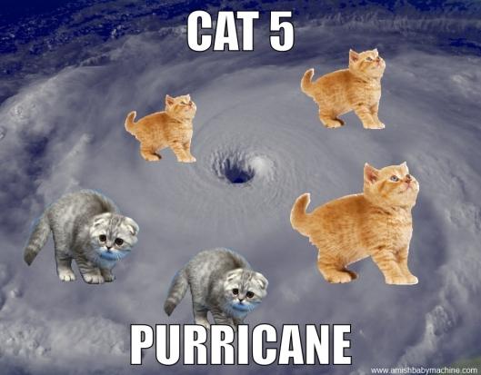 Cat 5 Purricane Meme