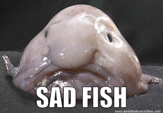Sad Fish Meme