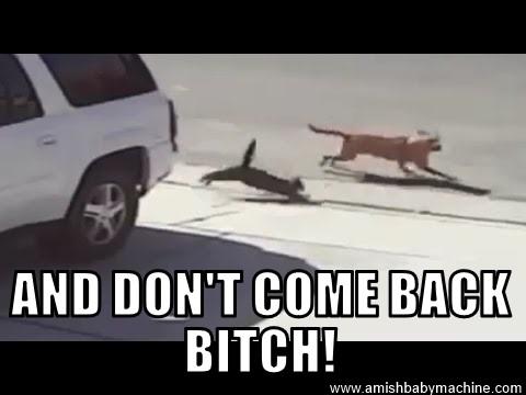 My Cat Attacks My Dog