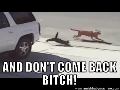 Cat Attacks Dog Meme