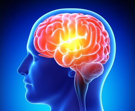 brain - Copy
