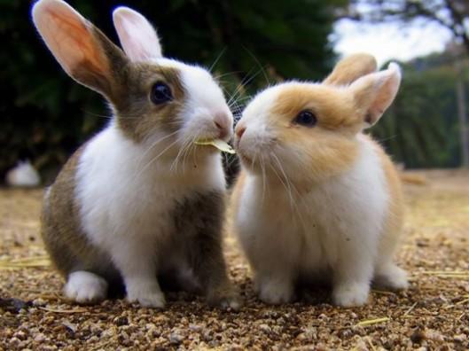 rabbits - Copy