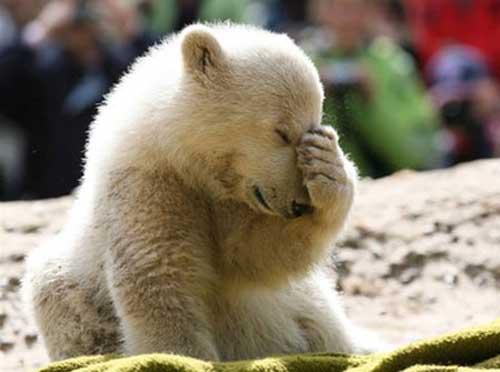 sad-polar-bear - Copy